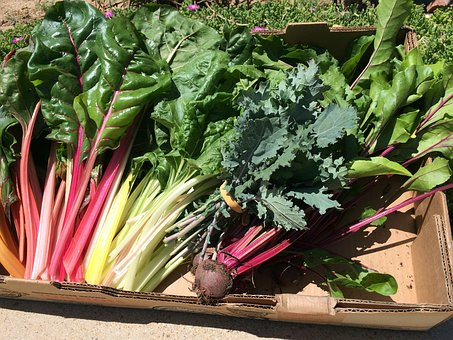 Swiss Chard, Vegetables, Beets, Garden, Fresh