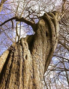 Tree, Forest, Nature, Landscape, Old Tree, Tribe, Log