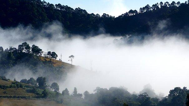 Fog, Landscape, Mist, Foggy, Nature, Forest, Morning