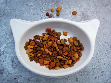 Cat, Food, Pet Food, Cat Food, Dry Food, Bowl, White