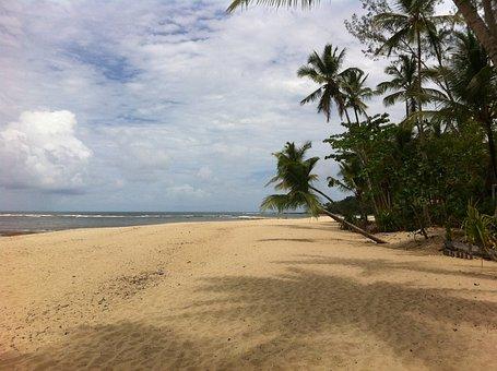 Brazilwood, Boipeba, Beach, Desert, Palm, Holiday
