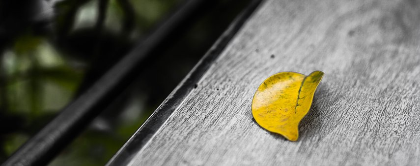 Alone, Art, Coffee, Leaves, Sun, Table