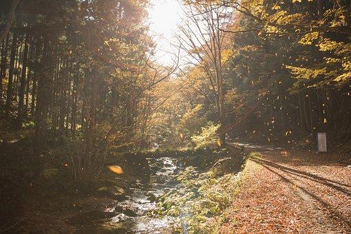 Branch, Dawn, Environment, Fall, Fog, Guidance