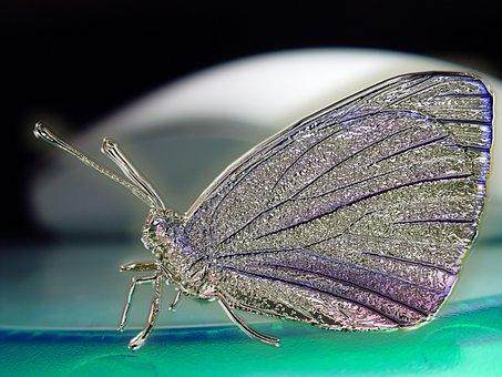 Butterfly, Digital, Digital Art, Graphic Design, Bugs