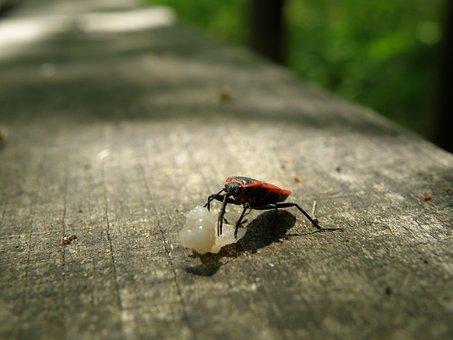 Ladybug, Macro, Error, Forest, Animal, Nature, Bench