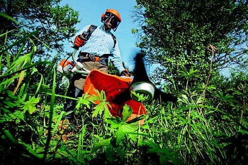 Garden, Gardening, Grass, Grass Cutter, Man, Outdoors
