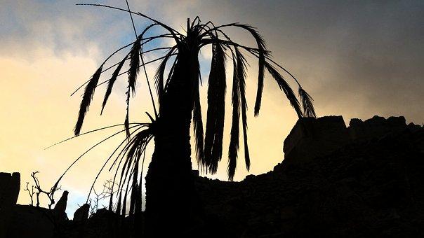 Dead Tree, Lavasa Sunset, Nature, Sunset