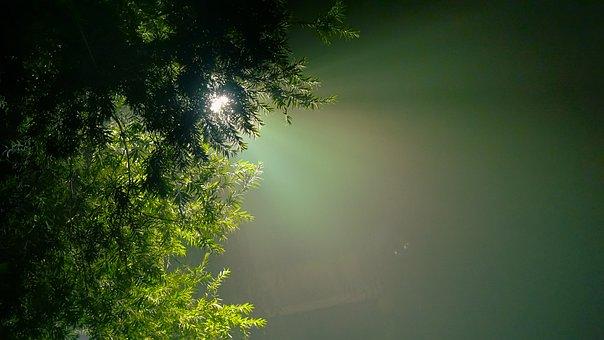 Evergreen, Hope, Hue, Light Glare
