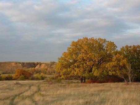 Nature, Autumn, Irina, Steppe, Oak, Volgograd Oblast