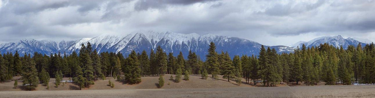 Rocky Mountain Trench, Ponderosa Pine, Panorama, Nature