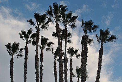 Palm Tree, Palm Grove, Sky, Dates, Clouds, Landscape