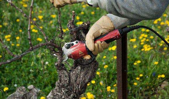 Vine, Vineyard, Secateur, Size, Winegrower