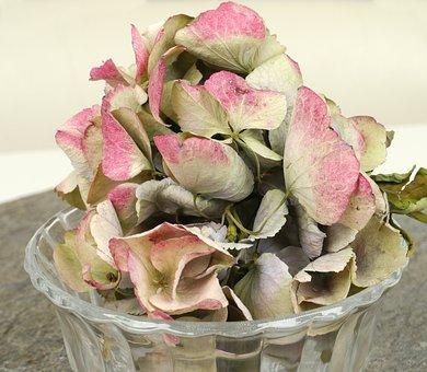 Hydrangea, Dried, Glass Bowl, Slate, Grey, Pink