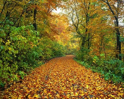 Autumn, Road, Fallen Leaves, Wet, Forest