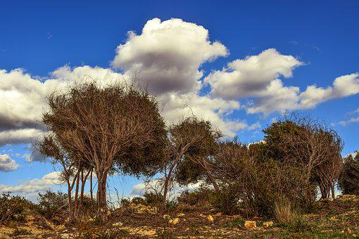 Trees, Nature, Scenery, Copse, Landscape, Winter, Sky