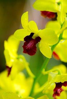 Flower, Chrysanthemum, Asia, Natural, Yellow