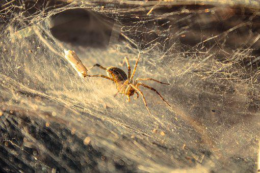 Spider, Insect, Bug, Nature, Pest, Wildlife, Design