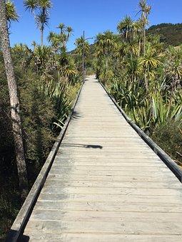 Pathway, Boardwalk, Nature, Walkway, Landscape