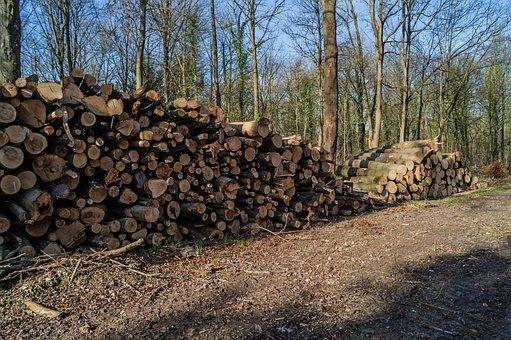 Woodpile, Logs, Timber, Wood, Lumber, Trunk, Nature