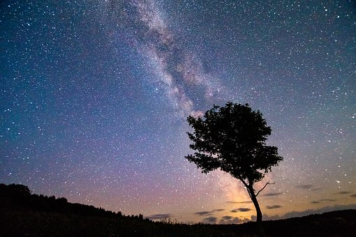 The Milky Way, Stars, Wood, Astrofotografi, Summer