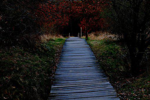 Wooden Track, Away, Plank Road, Trail, Wood Planks