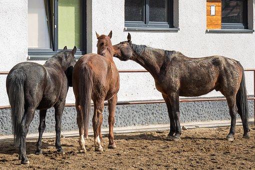 Horses, Brown Horses, Bay, Brown, The Horse Paddock