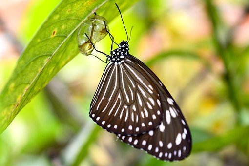 Butterfly, Moth, Insect, Cocoon, Natural, Animal, New