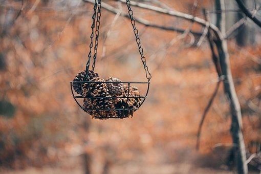 Pine Cones, Bird Feeder, Nature, Feeder, Cone, Pine