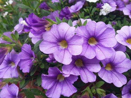 Flower, Pot, Plants, Nature, Flowers, Colors, Flourish