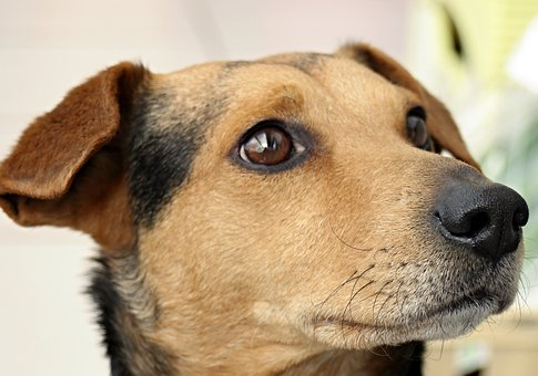 Friend, Dog, Portrait, Animal Photo, Animal, Pet, Head