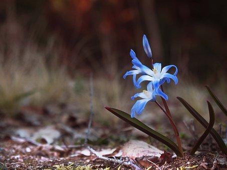 Garden, Spring, Nature, Flowers, Plant, Macro