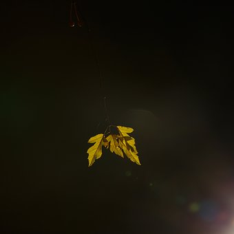 Leaf, Light, Natural, Green, Outdoor, Night Photography