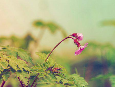 Herbs, Nature, Flower, Macro, Green, Field, Fields, Red