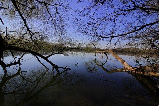 Aesthetic, Beaver, Water, Lake, Blue, Nature