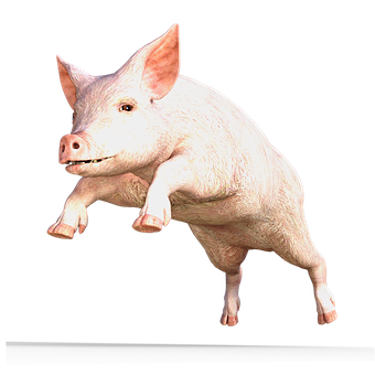 Pig, Animal, Sow, Happy Pig, Domestic Pig, Nature