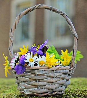 Wildflowers, Wild Flowers, Daisy, White, Yellow, Purple