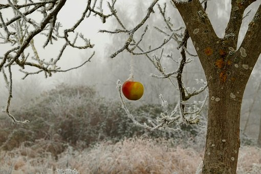 Winter, Frost, Wintry, Ice, Winter Magic, Cold