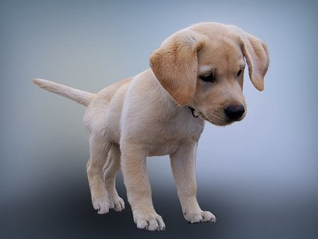 Animal, Dog, Puppy, Pet Photography, Young Dog