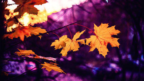 Autumn, Sheets, Pink, Yellow, Autumn Leaves