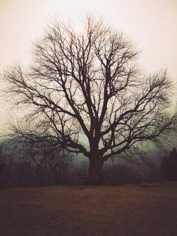 Zen, Tree, Empty