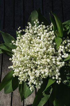Lily Of The Valley, Flower, Blossom, Bloom, Plant