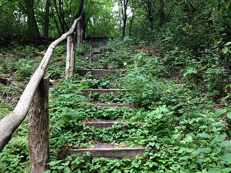 Forest, Stairs, Forest Staircase, Forest Path, Nature
