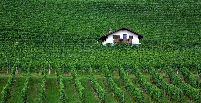 Green, Winyard, Swiss, Grapes, Wine, Scenic, House