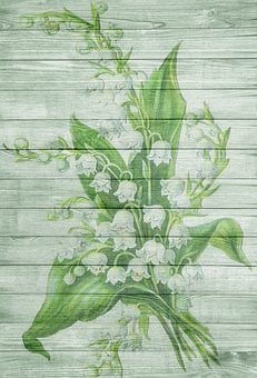 On Wood, May, Lily Of The Valley, Frisch, Spring