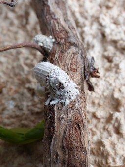 Cochineal, Parasite, Plague, Bug