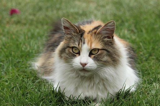 Pet, Cat, Rest, Feline, Animal, Gata, Animals, Friend