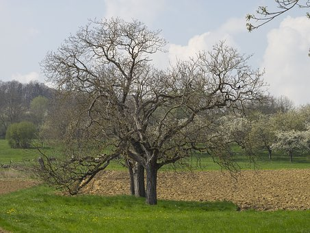 Spring, Landscape, Nature, Trees, Field, Green, Prairie