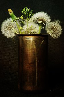Dandelions, Still Life, Flowers, Spring, Composition