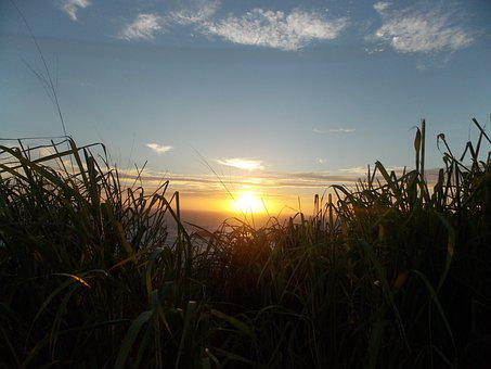 Sol, Light, Mato, Green, Sunset, Nature, Summer