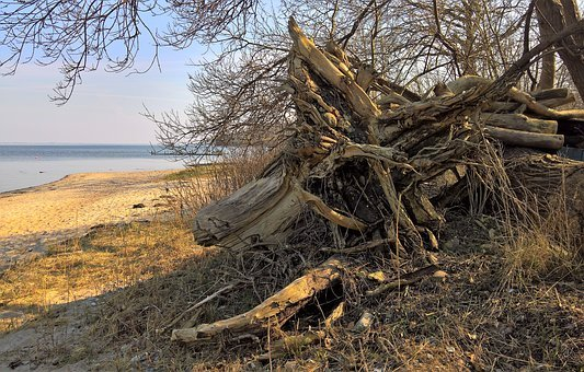 Nature, Tree Root, Uprooted Tree Trunk, Winter Storm